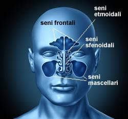 Come rimuovere polipi nasali a casa trattamento naturale for Definizione della lista punch